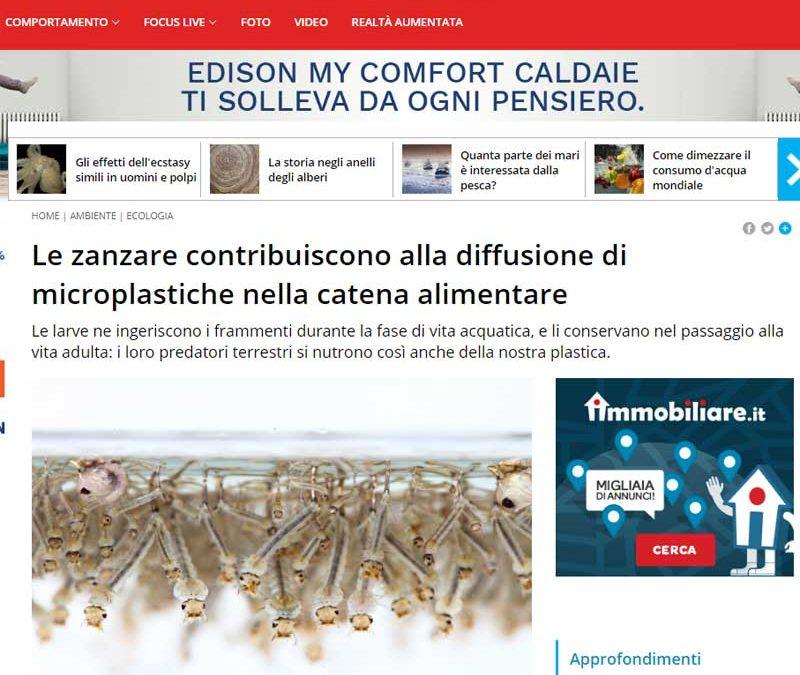 Le zanzare contribuiscono alla diffusione di microplasiche nella catena alimentare.