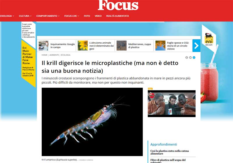 Il krill digerisce le microplastiche