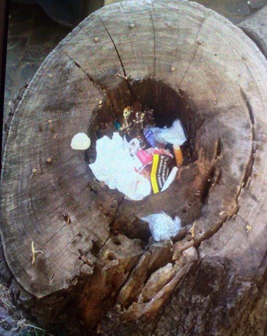 Oltre al gorgo dei rifiuti, uno dei tanti alberi morti. Foto emblematica. Naturalmente Roma