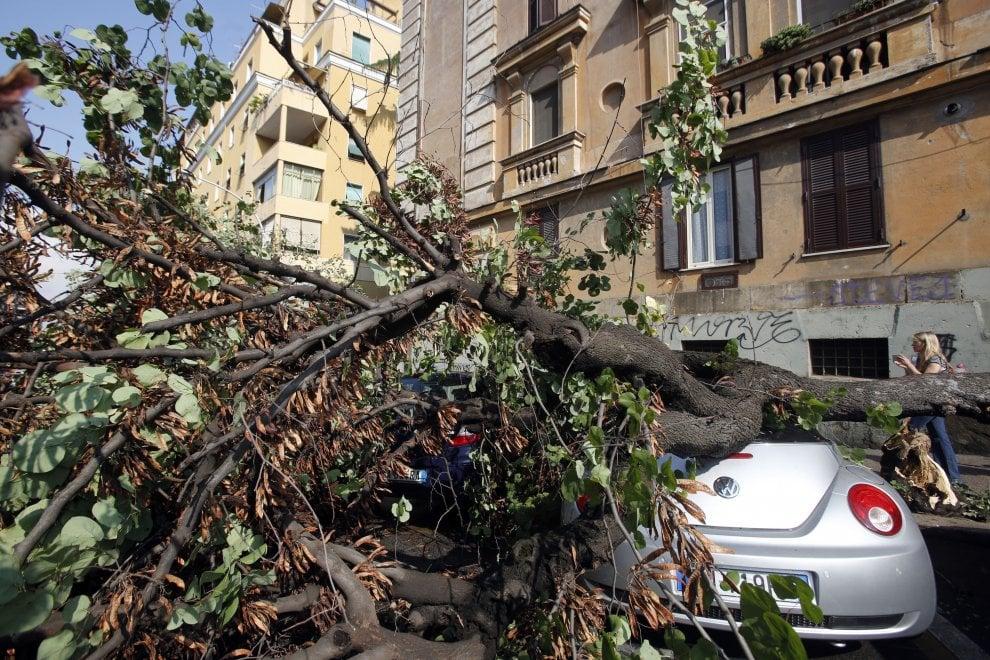 Quando piove a Londra cadono gli alberi come a Roma?
