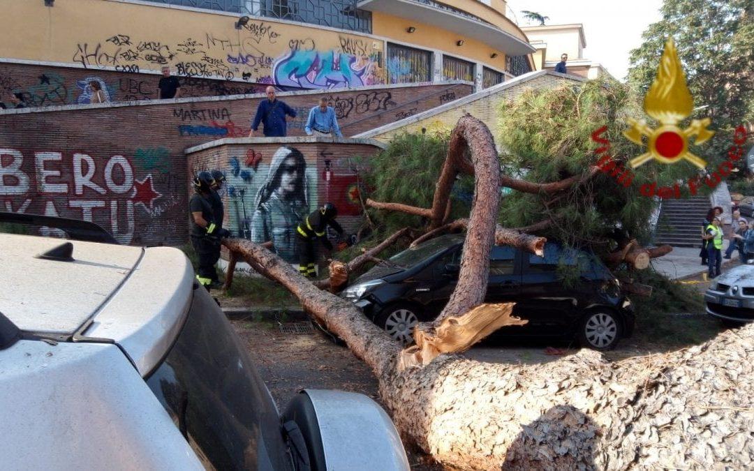 Roma, un pino marittimo si schianta su auto in sosta. Nessun ferito