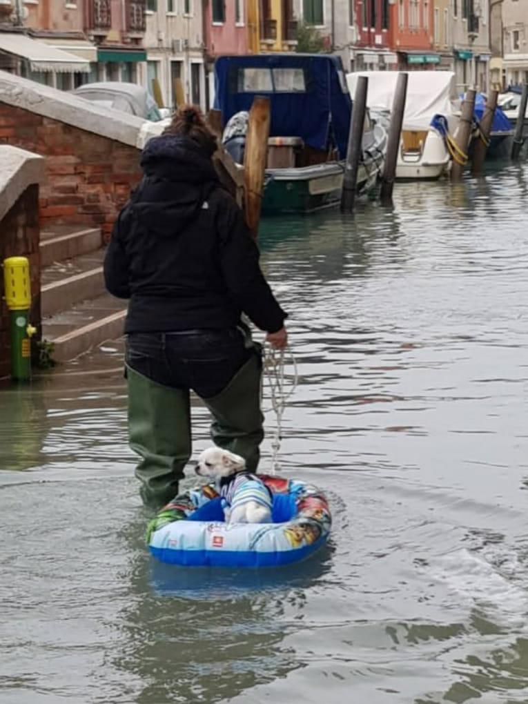 Venezia, se c'è qualcosa da salvare…L'immagine più bella d…