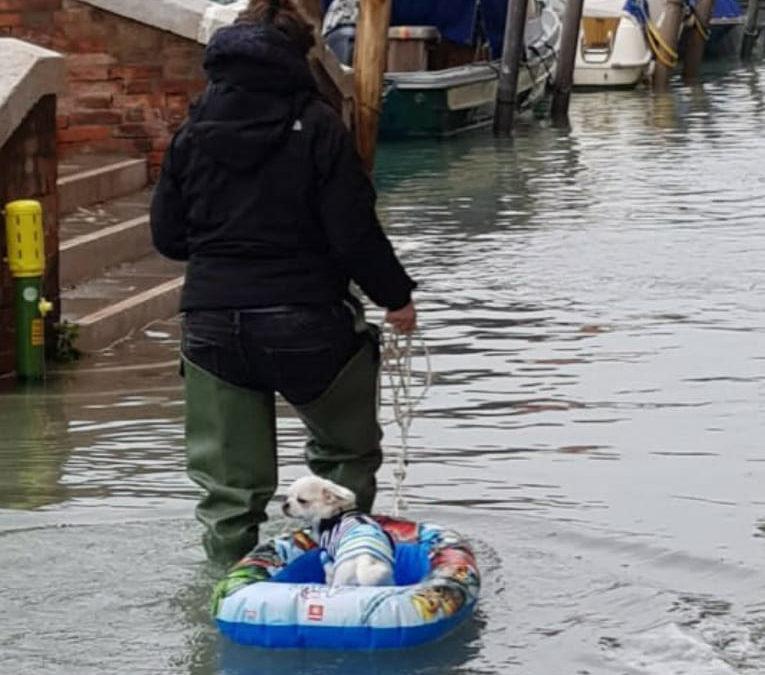 L'immagine più bella della tragedia di Venezia …